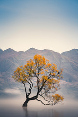 Beautiful vertical long exposure photo of That Wanaka tree in the Autumn times, when the morning with steam floating above the water with moutain in background, Wanaka, New Zealand