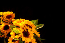 Photos Of Sunflowers Composition, Black Background, Placed On The Bottom Left