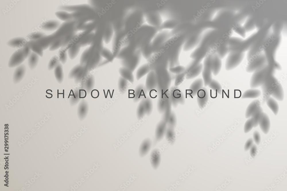 Fototapeta Leaves shadow effect on white background