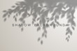 Leaves shadow effect on white background