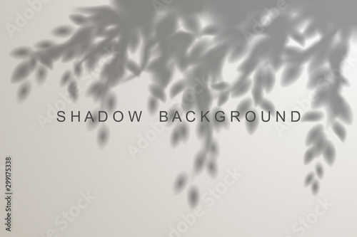 Obraz Leaves shadow effect on white background - fototapety do salonu