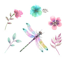 Set Of Watercolor Illustrations, Wildflowers And Dragonfly Insect On A White Background