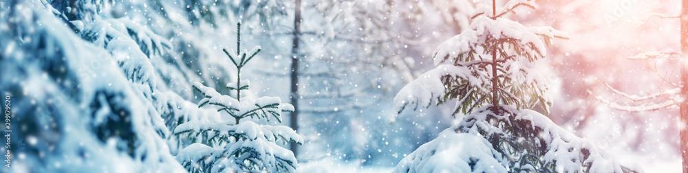 Fototapeta Beautiful tree in winter landscape in the morning