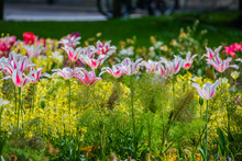 Summer Blooming Flowers In The Parks. One Of Many Flower Beds In The Park In Cambridge UK