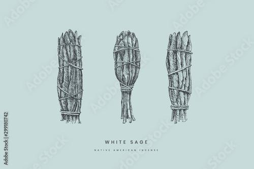 Photo Hand-drawn bandage bundles of a white sage of various shapes