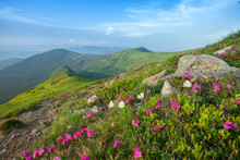 Fields Of Flowers In The Moun...