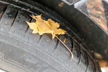 Summer Tires With Autumn Leaves And Wetness