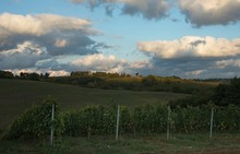 Last Rays Of Sun Over Vineyard