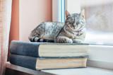 Fototapeta Zwierzęta - Kot siedzący na książkach