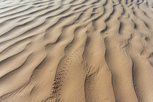 Lizard Footprints In The Sand Trails, Detailed Close Up Macro In Desert