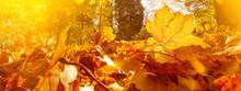 Many Colorful Fallen Autumn Le...