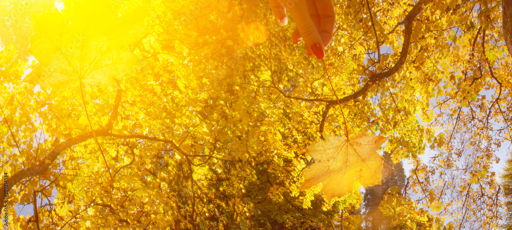 Fototapety, obrazy: many colorful fallen autumn leaves - autumnal background panorama banner long