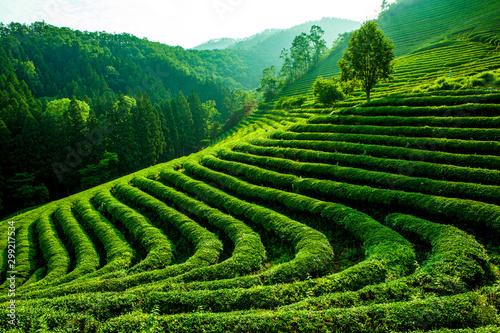Canvastavla  차, 들판, green, 경작, 경관, 농장, 농장, 네이처, 고개, 여름, sky, 마운튼, 식물, 목초, asia, 농촌, 목초지, 봄, 곡
