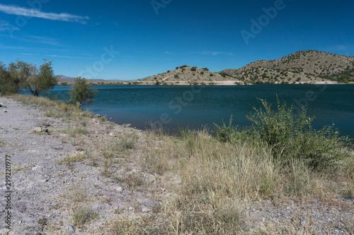 Photo  Shoreline brush at Bill Evans Lake in New Mexico.