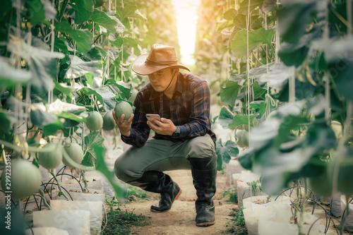 Fotografía  Asian farmers check the Melon yield in the greenhouse