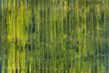Mossy Wooden Background For Design
