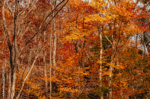 Fototapety, obrazy: Autumn in Forest