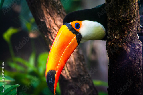 Deurstickers Toekan Close up view of a toucan and its beak