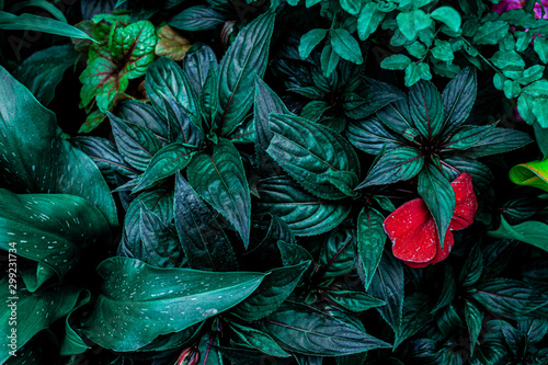 Foto  abstract green texture, nature background, tropical leaf