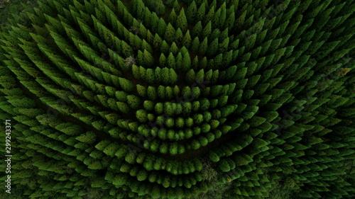Fototapeta abstract green background obraz