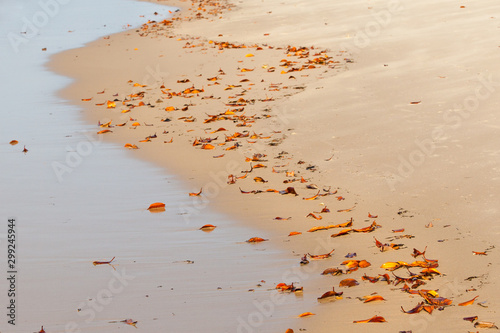 Glistening yellow and orange leaves lies scattered in Nature's abstract path design as the tide recedes Wallpaper Mural