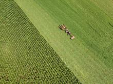 Amish Farmer Plowing A Corn Fi...