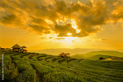 Tuinposter Rijstvelden Landscape view of green terraced rice field in Pa Pong Pieng , Mae Chaem, Chiang Mai, Thailand on sunset time.