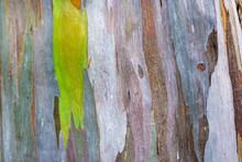 Colorful Pattern Of A Rainbow Eucalyptus