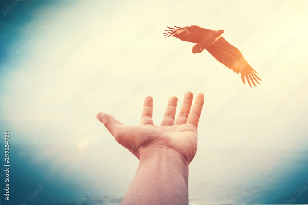 Fototapety, obrazy: Freedom and feel good concept. Man hand open and eagle bird fly on sunset abstract background.