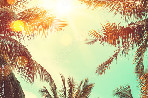 Poster Palmier Tropical palm tree with colorful bokeh sun light on sunset sky cloud abstract background.