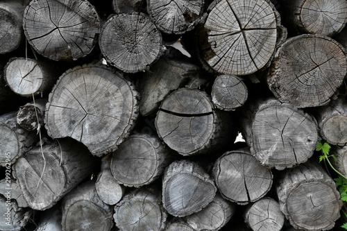 Cadres-photo bureau Texture de bois de chauffage Cross section of tree trunks pattern, old grey round wood cuts