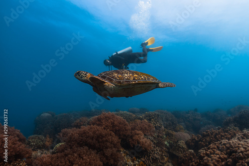Photo  Scuba diver swims together with the huge sea turtle in the tropical sea