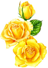 Summer Flowers, Yellow Roses W...