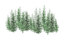 Hand Drawn Watercolor Conifero...