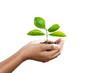 Leinwanddruck Bild hand holding young plant isolate on white background