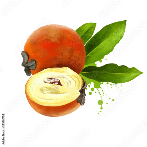 Fototapeta Kamagong, mabolo, talang, butter fruit, velvet apple