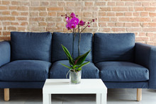 Living Room Table With Orchid Flowerpot. Purple Orchid Flower On The Table In Modern Interior Design.