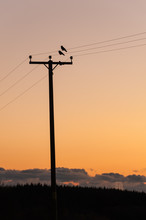 Birds On Wires At Sunset