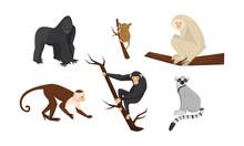 Different Species Of Monkeys S...