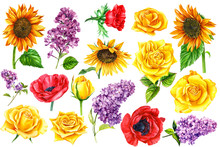 Set Of Yellow Roses, Red Anemones, Lilac And Sunflowers Painted In Watercolor On A White Background, Botanical Illustration