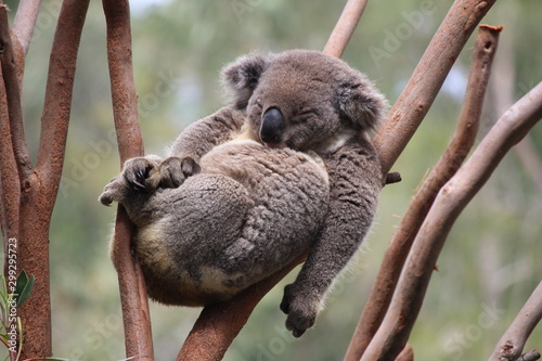 Recess Fitting Koala Relax Koala