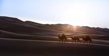 Nomadic Married Couple Crossing Huge Sand Dunes With Their Bactrian Camel Caravan At Sunrise. Gobi Desert, Mongolia.