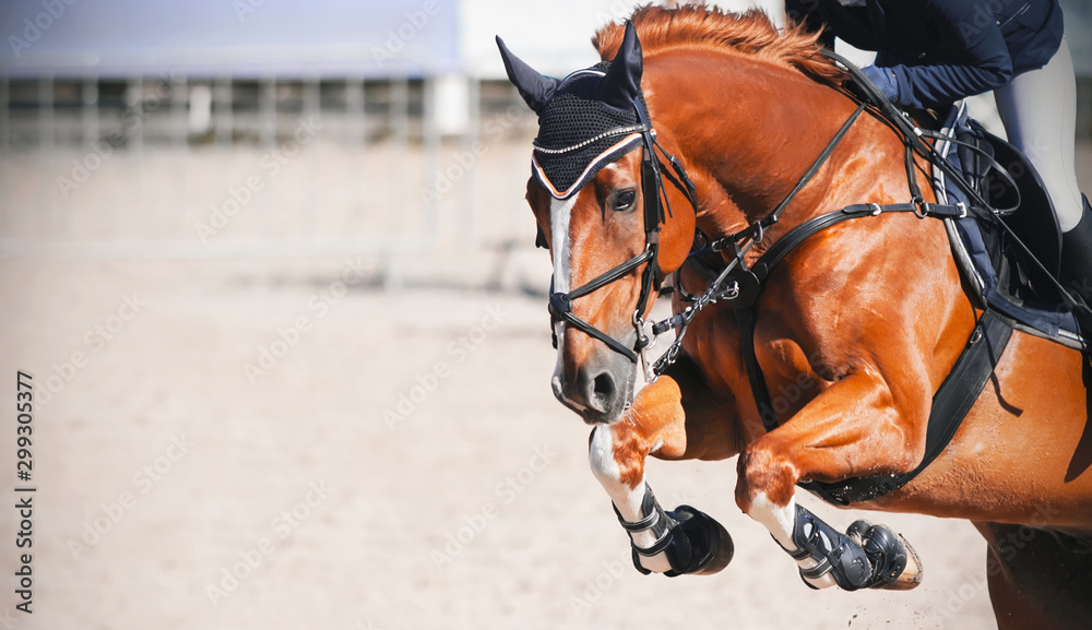 A sorrel beautiful horse with a rider in the saddle jumps high at a show jumping competition on a Sunny day. <span>plik: #299305377 | autor: Valeri Vatel</span>