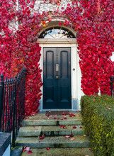 Front Door Of Vintage Irish Georgian Style House, Archway Surrounded By Vibrant  Red Autumn Leaves