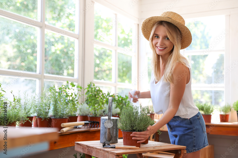 Fototapeta Young woman sprinkling home plants at wooden table indoors