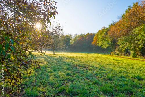 Fototapeta Trees in fall colors in a green grassy field in sunlight in autumn obraz na płótnie