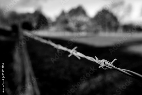 Barbed wire fence seen at the edge of a grazing field at a dairy farm Canvas Print
