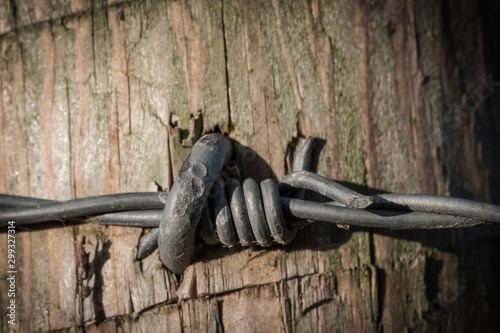 Detail of the multiple strands of barbed-wire with there sharp points can be seen, together with some rust on one of the points Fototapet