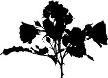 Black Silhouette Of Rose Bush ...