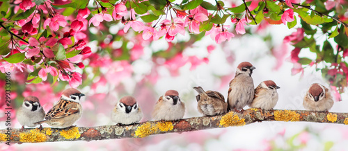 natural panoramic background with many small funny birds sparrows sitting in the Wallpaper Mural